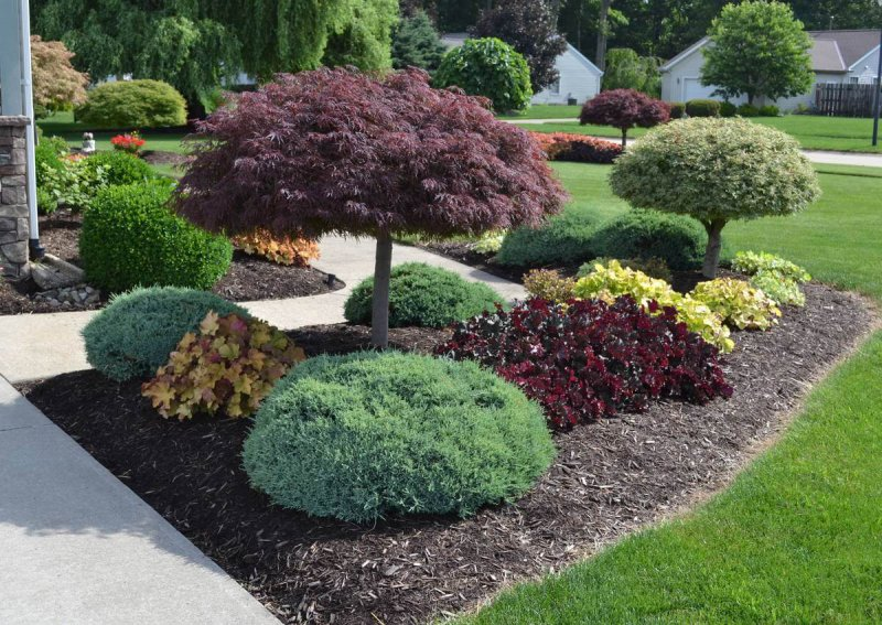 amazing-landscaping-tree-ideas-fresh-on-ideas-design-ideas